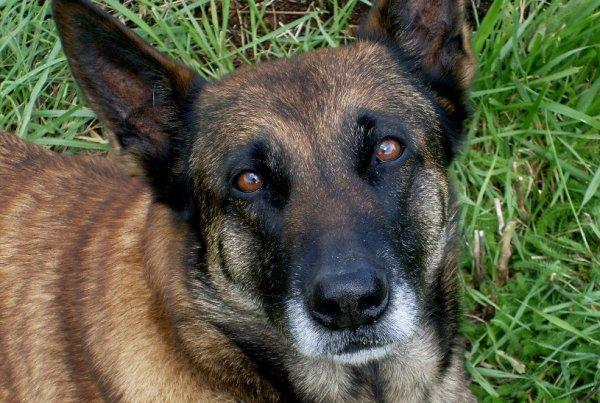 Irka, un amour de chien