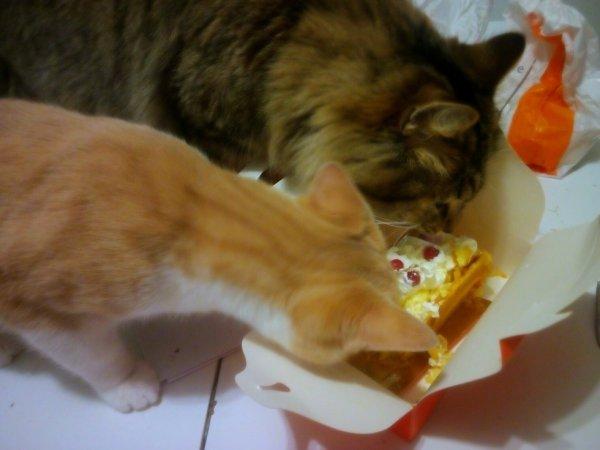 Hummm mon bon gâteau ... SNiff