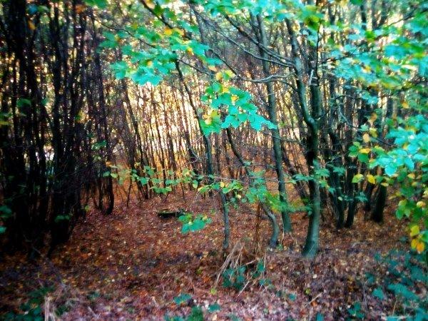 Forêt de Canteleu (76)