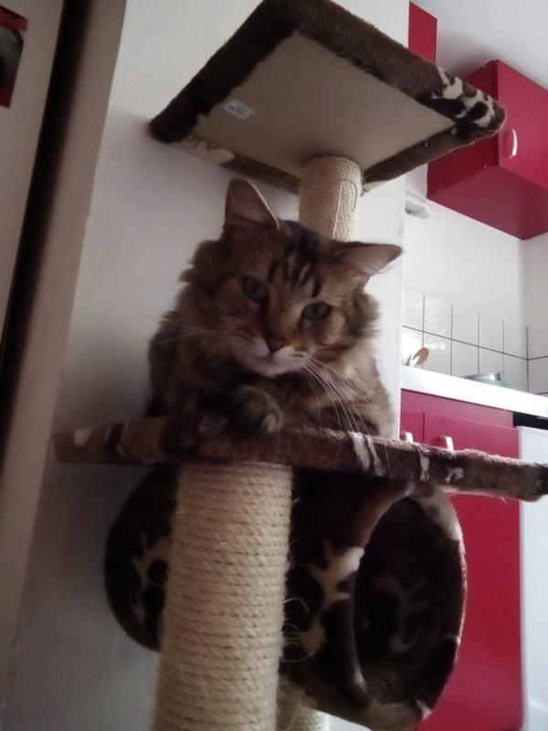 Content de son nouvel arbre  à  chat..  Ça évitera à mes mûrs de souffrir  haha,  ツ Loulou  ♥