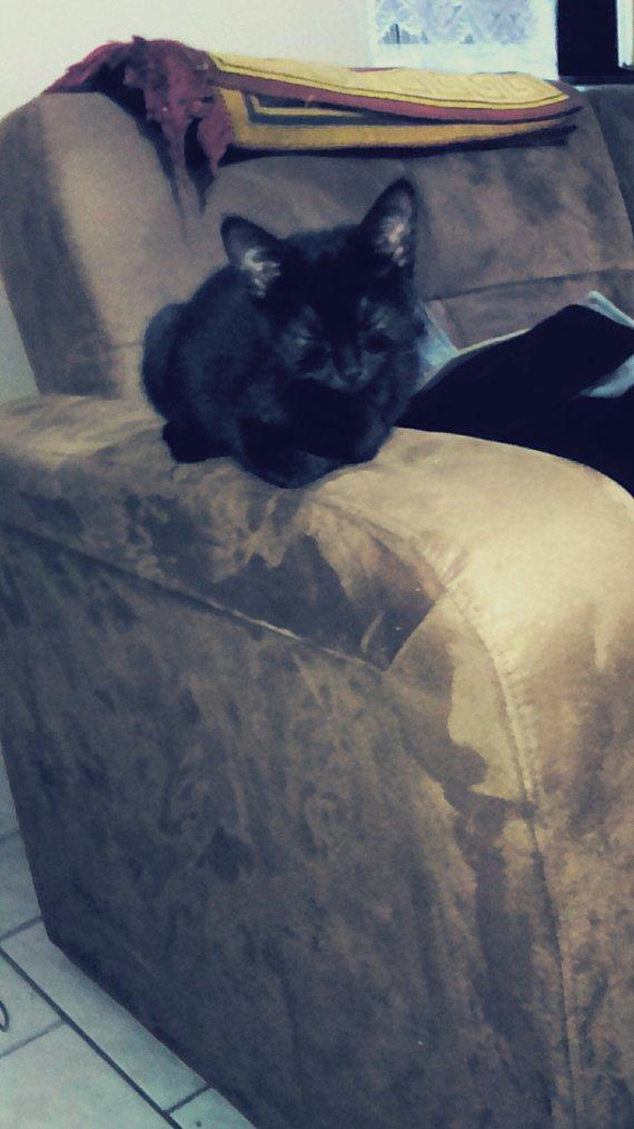 Lena,  3 mois. ♥