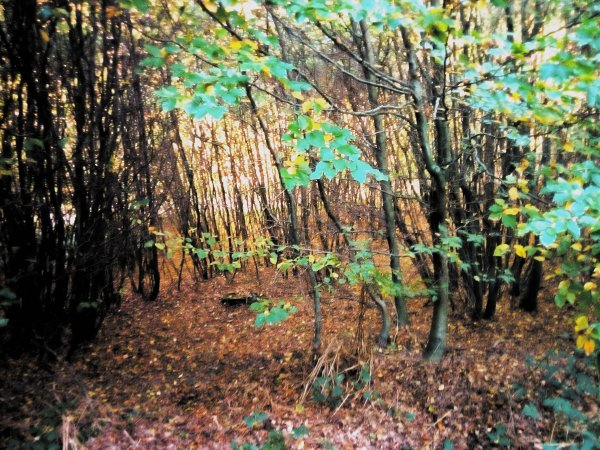 J'adore  ....forêt