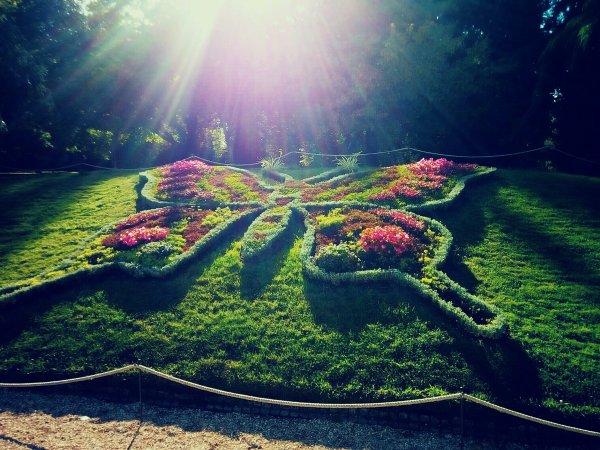 Super papillon fait,  jardin des plante Rouen.  Magnifique.