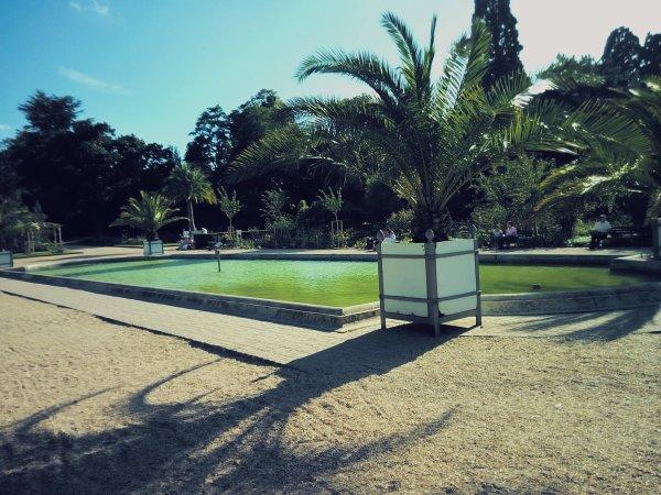 Bassin'.  C'est agréable l'été y'a la fontaine au milieu.  Jardin des plante,  Rouen'