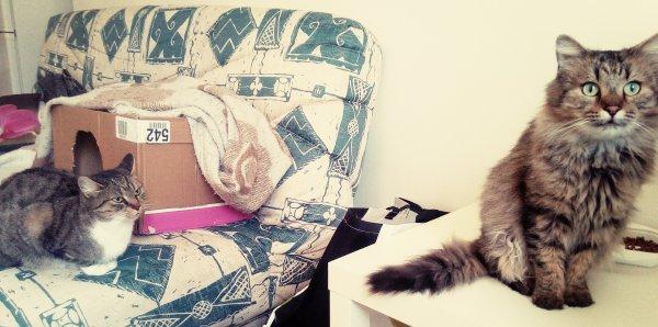 Elle se rapproche doucement... Louloute et Loulou . ❤