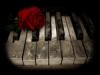Sleeping-Romanticide