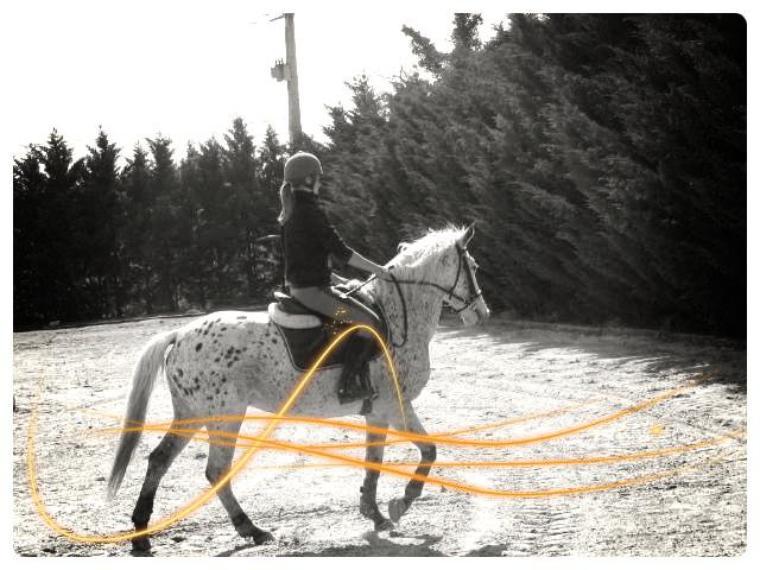Le cheval :un être vivant comme les autres .