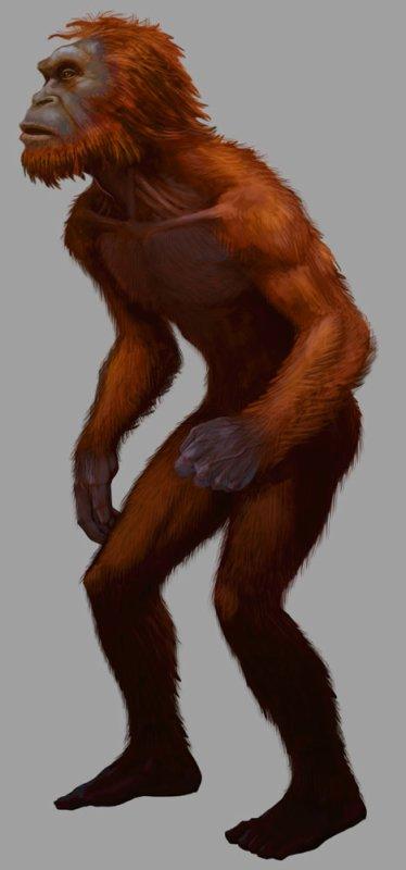 L'Orang Pendek, à la recherche de l'animal bel et bien perdu