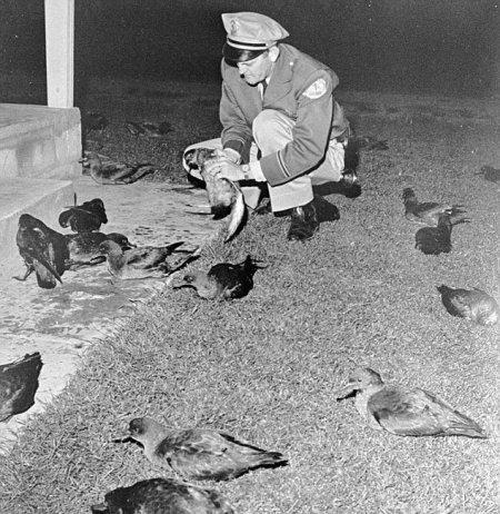 Le film Les oiseaux s'est inspiré d'un incident à Santa Cruz