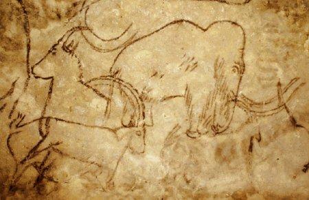 L'art de la Préhistoire : un livre nous montrant les Picasso du Paléolithique