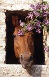Photo de Sexy-horse2009
