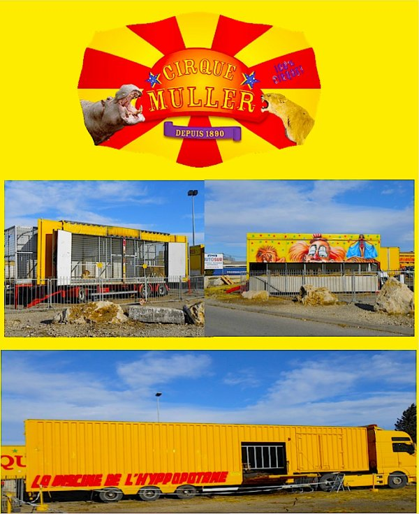 TOUT NOUVEAU REPORTAGE SUR LE CIRQUE MULLER 2013 DE PASSAGE À AVIGNON ! ( cirque présent plusieurs fois dans le blog !! )