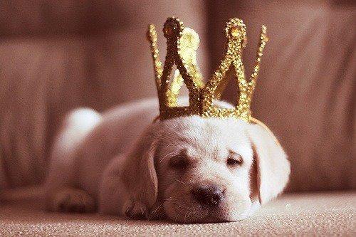 Tu pleures pour un garçon?  Relève la tête Princess ta couronne va tomber.