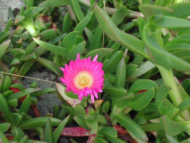 Blog de especesinvasives page 3 les plantes invasives for Vers dans les plantes