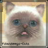 Nitendoogs-cats