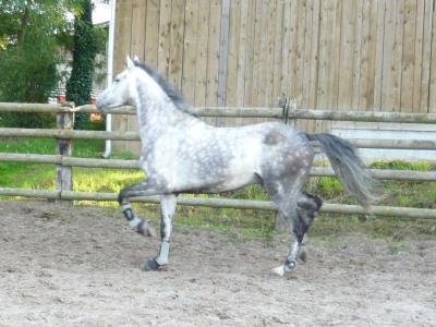 Blog de bananeuhhh votre cheval vous ressemble comme for Le miroir de la disette