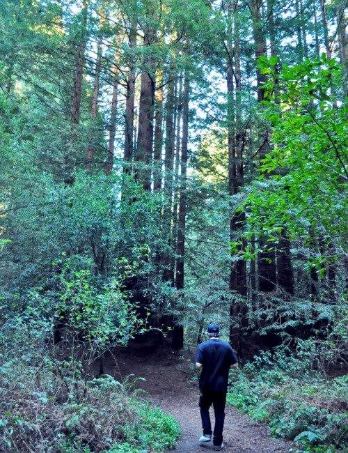 petit journé dans les bois