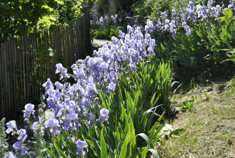 village d 39 autichamp les iris en fleurs photo sm99 blog mic mac numero 2. Black Bedroom Furniture Sets. Home Design Ideas