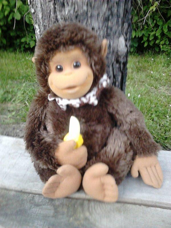 singe geochi presiozi 2008