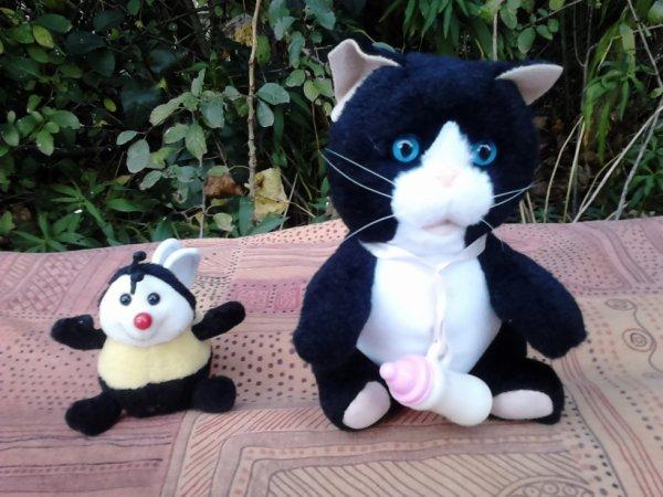 truddi et chat biberon et miaule