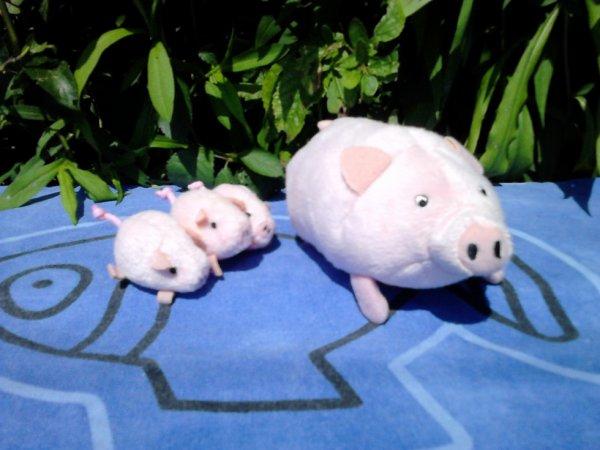 cochon+bebes