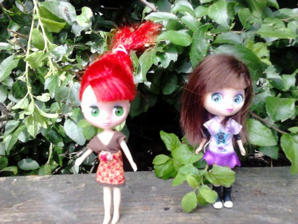 minis blythes