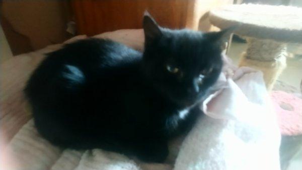 tiffany une gentille chatte de 19ans, abandonnee a 15ans! tres belle