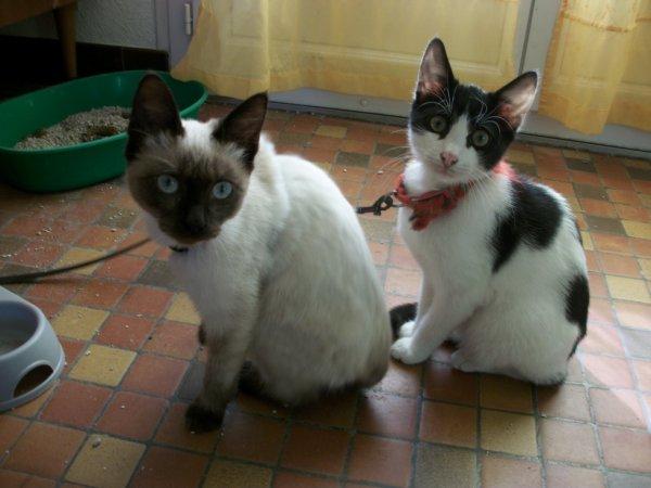 mes deux bebe chat