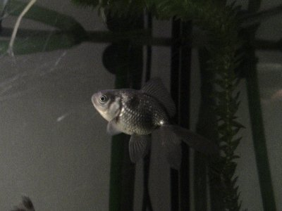 Mes nouveaux poissons