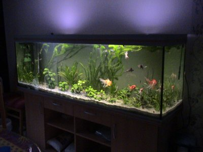 mon aquarium poissons rouges japonais une belle histoire. Black Bedroom Furniture Sets. Home Design Ideas