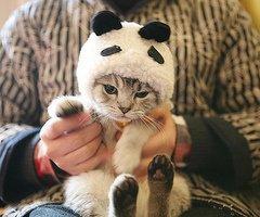 Cat or Panda ?