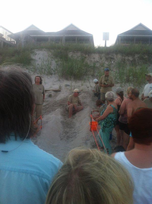AOÛT : Surf city ( protection des petites tortues sur la plage ?)