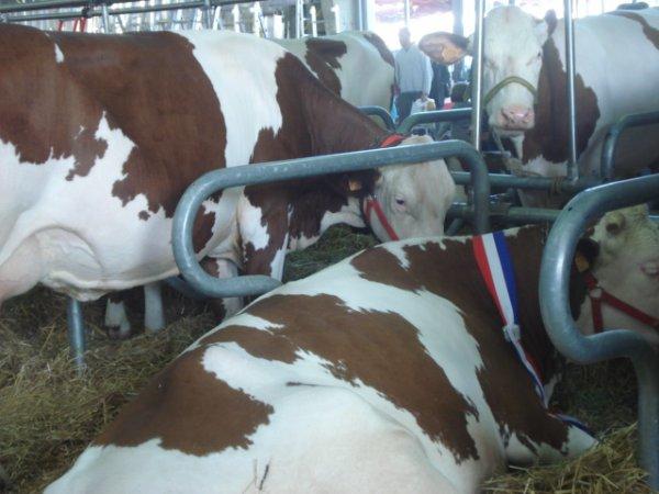 Salon de l'Agriculture à Tarbes le 10-03-2012