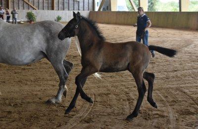 Poulains poneys 2018