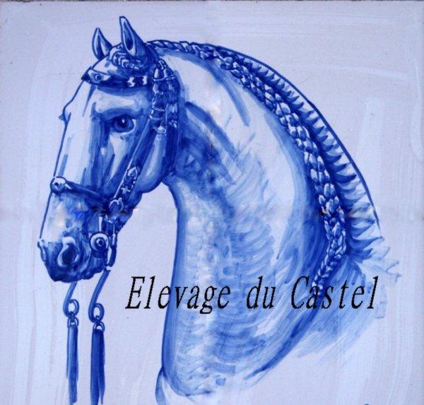 Elevage du Castel