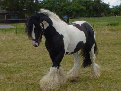 Cheval noir et blanc blog de chevel du 60 - Cheval a imprimer noir et blanc ...