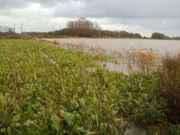 innondation