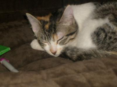 regardes mon chat aussi fait la star de la maison
