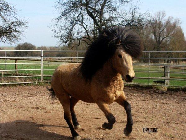 Poney Lion?