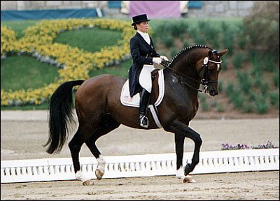Le dressage, c'est parce que ils sont deux qui font 1, le cheval & son cavalier(e). ♥
