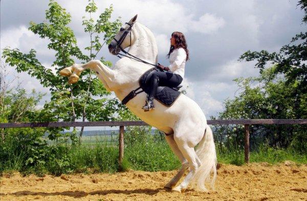 Le cheval est l'artiste & le cavalier(e) le chorégraphe. ♥