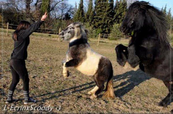 Lysiane avec son cheval Ecrin Des Faux & son poney Scoody ils font juste rêver. ♥