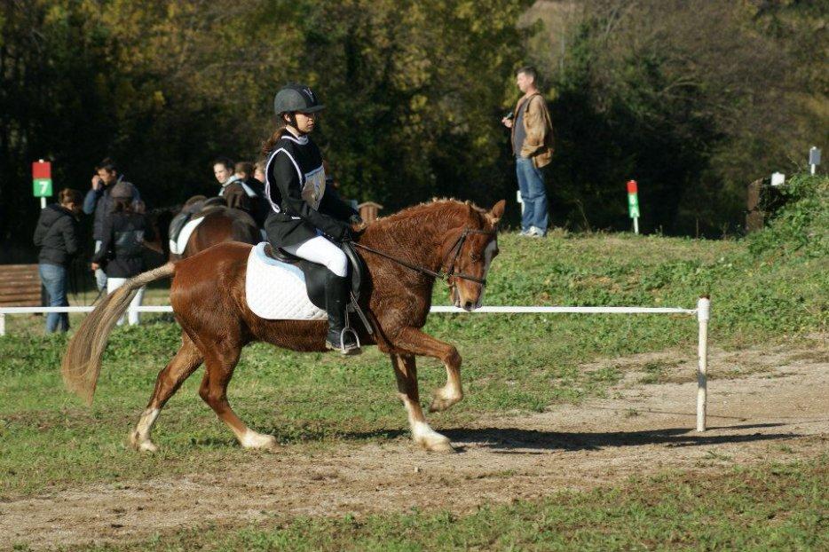 Les chevaux, bien plus qu'une simple passion.. ♥