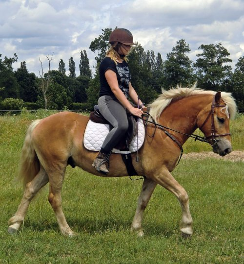 Mon poney en OR