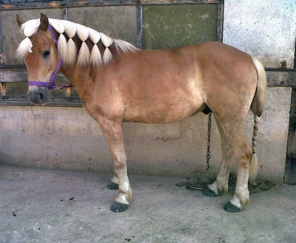 Je suis addicte à toi mon poney.