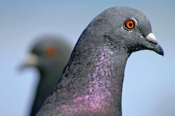 Un virus très contagieux pour les oiseaux a été découvert.