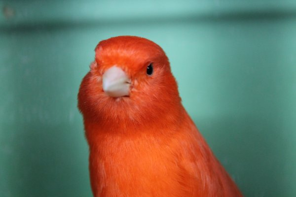 red intensiv