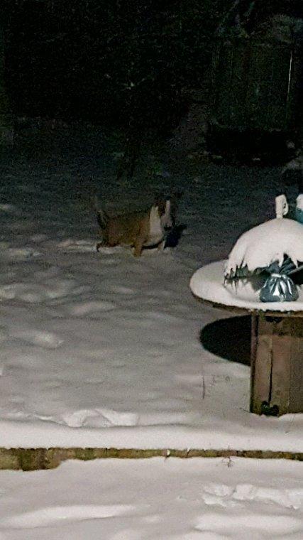 Arkan dans la neige