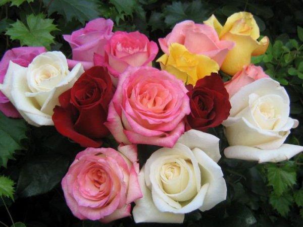 pour toutes les femmes du monde joyeux saint valentin