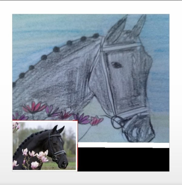 Dessin cheval noir